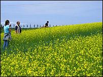 mustard_field