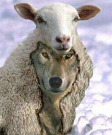 wolf in sheeps skin